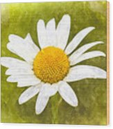 Chamomile Watercolor Wood Print