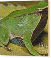Darwins Frog Wood Print