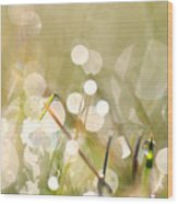 Dew In Grasses Wood Print