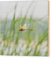 Dragonfly Flying Wood Print