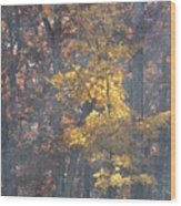 Ha Ha Tonka Wood Print