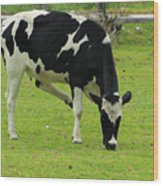 Holstein Cow On A Farm Wood Print
