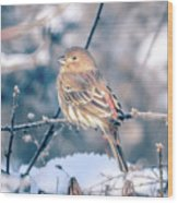 House Finch Tiny Bird Perched On A Tree Wood Print