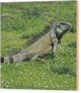 I Iguana Wood Print