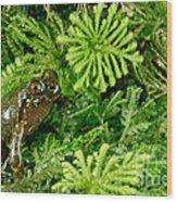 Mehu�n Green Frog Wood Print