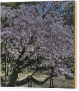 Nara Japan Wood Print