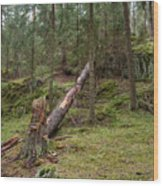 Old Forest In Kauppi Tampere Wood Print