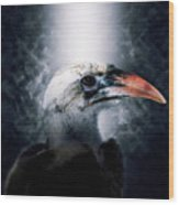 Red-billed Hornbill ,samburu, Kenya Wood Print