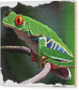 Red-eyed Leaf Frog Wood Print