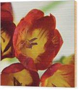 Red Freesia Wood Print