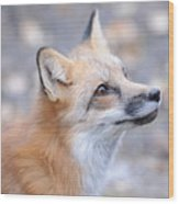 Red Tailed Fox Wood Print