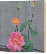 5 Roses In Rain Wood Print