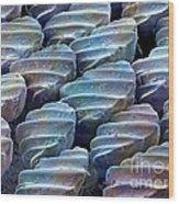 Sandbar Shark Skin, Sem Wood Print