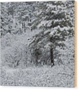 Snowstorm In The Pike National Forest Wood Print