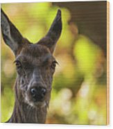 Stunning Hind Doe Red Deer Cervus Elaphus In Dappled Sunlight Fo Wood Print