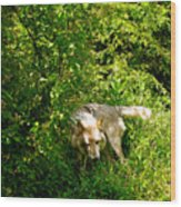 The Wild Wolve Group B Wood Print