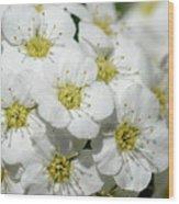 White Spiraea Flower Wood Print
