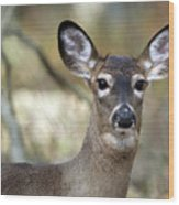 White Tailed Deer Smithtown New York Wood Print