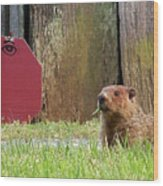 5002-groundhog Wood Print