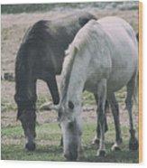 Wild Mustangs Wood Print