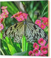 5050- Butterfly Wood Print