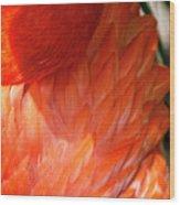 5060- Flamingo Wood Print