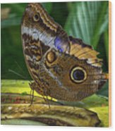 5113- Butterfly Wood Print