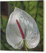 5129- Flower Wood Print