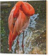 5182- Flamingo Wood Print