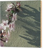 Tree Blossoms Wood Print