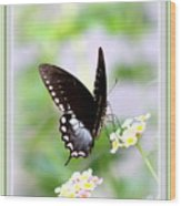 5276-001- Butterfly - Swallowtail Wood Print