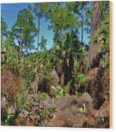 55- Everglades Afternoon Wood Print
