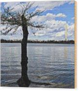 Washington Dc Usa Wood Print