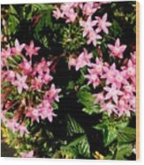 Love Flowers Wood Print