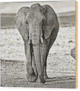 African Elephant In The Masai Mara Wood Print