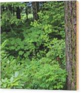 Alaska_00006 Wood Print