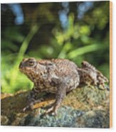 Amphibian, Common British Toad / Frog Wood Print