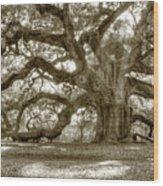 Angel Oak Live Oak Tree Wood Print by Dustin K Ryan
