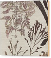 Aquatic Animals - Seafood - Algae - Seaplants - Coral Wood Print