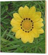 Australia - Daisy With Yellow Petals Wood Print