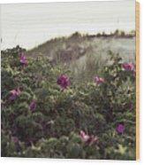 Rose Bush And Dunes Wood Print