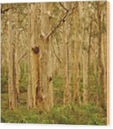 Boranup Forest II Wood Print