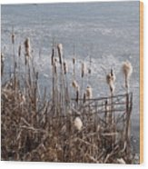 Bulrush Wood Print