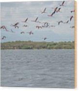 Colombia Sanctuary Of Flamingos Near Riohacha Wood Print