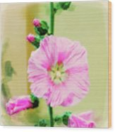 Common Hollyhock  Wood Print