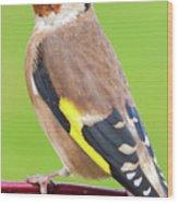 European Goldfinch Bird Close Up   Wood Print