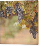 Grapes On The Vine Wood Print
