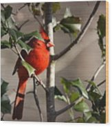 Img_0001 - Northern Cardinal Wood Print