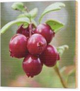 Lingonberry Wood Print