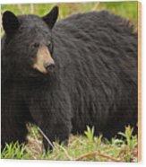 Maine Black Bear Wood Print